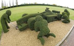 A topiary sculpture of an F1 motor car being tended to by engineers at the F1 Williams Museum in Grove, Oxfordshire, November 2009.