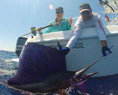 Sailfish Release! Contender boats in Guatemala, pink rods, yamaha.Girl fishing