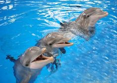 Sorry elephants, it's dolphins that never forget article