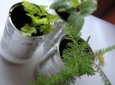 have bf drill small holes through the bottom of old soup cans to reuse as small herb pots.