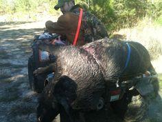Louisiana style Hog Hunting, Family Traditions, Louisiana, Elephant, Pigs, Animals, Style, Swag, Animales