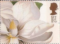Greetings Stamps. 19th-century Flower Paintings 1st Stamp (1997) Magnolia grandiflora (Ehret)