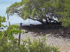 Folha certa : Meio ambiente: parceria da Ufersa com Secretaria d...