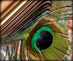Edición de una pluma de pavo real
