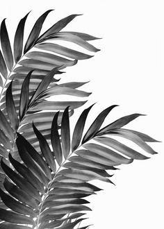 """Beautiful """"Palm Leaves Black metal poster created by Anita's & Bella's Art . Our Displate metal prints will make your walls awesome. Black And White Picture Wall, Black And White Posters, Black And White Wallpaper, Black And White Wall Art, Grey Wallpaper, Black Walls, Black And White Pictures, Black And White Leaves, White White"""