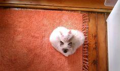<3 heart shaped cats <3
