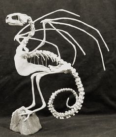 The skeletal remains of the Jersey Devil? #monsters #paranormal #cryptozoology