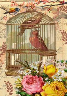 Themes Vintage Illustrations/pictures - Birdcage (140 pieces)