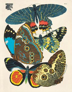 Vintage French Butterfly Illustration Plate 2: The original art is by Eugène Séguy from the early 1920s. He was a French entomologist and artist who specialized in winged insects. He held a chair of e