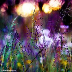 Tumblr. Purple flower meadow, lights