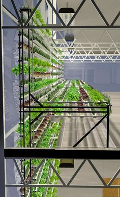Vertical farm can make pounds of tomatoes on the side of a parking lot is part of Hydroponic gardening The Wyoming town of Jackson gets long and bitter winters One mile above sea level in a - Aquaponics System, Aquaponics Plants, Hydroponic Gardening, Backyard Aquaponics, Hydroponic Systems, Greenhouse Farming, Indoor Farming, Indoor Gardening, Urban Agriculture