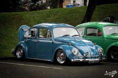 nice blue beetle