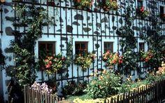 in the Austrian Mühlviertel Balcony Window, Roots, Outdoor Structures, Plants, Beautiful, Austria, Nice Asses, Flora, Plant