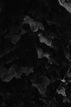wet dark cemetery ivy