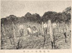 """Japanese Immigrants' Grape Farm, Brazil"", Juvenile Encyclopedia, 1932 Vol. 14 World Geography 兒童百科大辭典 第十四巻 地理篇(三) 玉川學園出版部 昭和七年"