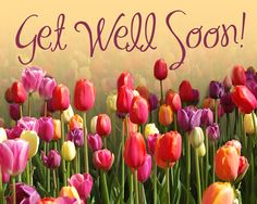 Get Well Soon Flowers Get Well Prayers, Get Well Soon Messages, Get Well Soon Quotes, Get Well Wishes, Get Well Cards, Birthday Greetings, Birthday Wishes, Birthday Msgs, Happy Birthday