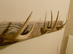"""Antler towel rack""""..... Single point horns instead, with dull tips."""