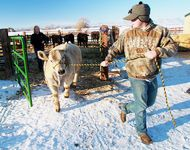 Preparing for the National Western Stock Show