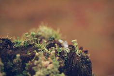 Yeah, I'm likin' the lichen.. ;)