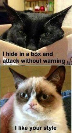 Grumpy cat admires a fellow feline's style - Funny Cat Quotes Grumpy Cat Quotes, Grump Cat, Funny Grumpy Cat Memes, Funny Animal Jokes, Cat Jokes, Cute Funny Animals, Funny Animal Pictures, Animal Memes, Cute Cats