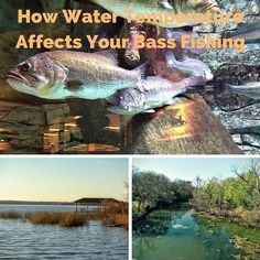 As the seasons change, so do the largemouth bass and where they can be found. Learn how the water temperature affects where you find bass.
