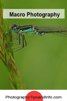 Check out this video by Thomas Shahan for some great inexpensive tips for getting that perfect macro photography shot of insects in the field using extension tubes and a home made flash diffuser. Workout For Beginners, Blogging For Beginners, Macro Photography, Travel Photography, Fotografia Macro, Take Better Photos, Image Editing, Photo Tips, Blog Tips