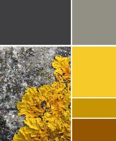 yellow tones for walls - Google Search