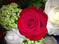 """Freedom"" Rose"