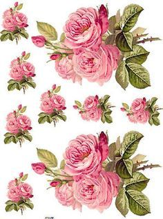 shabby chic painted roses on summer green with white french script - Google Search
