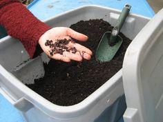 Indoor worm composting
