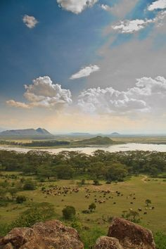 Lake Elmenteita is a soda lake in the Great Rift Valley, about 120 km northwest of Nairobi, Kenya.