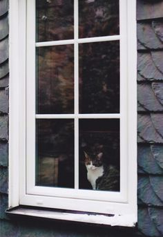 Cat in the Window - MR#4 | Flickr - Photo Sharing!