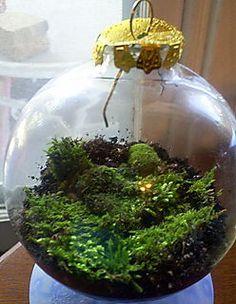 Moss and Mushroom on Pinterest | Moss Garden, Moss Terrarium and ...