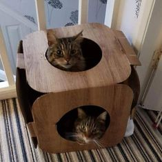 Oh my goodness that is so funny! I can't believe they squeeze into one pod #cat #catsofinstagram #cats_of_instagram #catfurnature #catfurniture #catsinboxes #cattoy #INSTACAT_MEOWS #cutecat #PurrMachine #catsinboxes #catbox #Excellent_Cats #BestMeow #dailykittymail #thecatniptimes #catcube #catpod #ArchNemesis #FlyingArchNemesis #myindoorpaws #ififitsisits #cutecatcrew #catchalet #catnip #themeowdaily #kitty #dailykittymail #catgrass