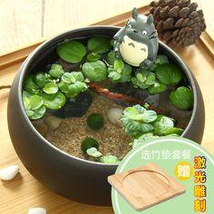 苔蘚微景觀生態瓶小盆栽marimo海藻球辦公室植物創意盆栽龍貓擺件