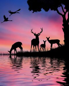 Acrylic painting Deer in the wood by ATB - - Art Et Nature, Image Nature, Afrique Art, Silhouette Painting, Animal Silhouette, Silhouette Pictures, Oil Pastel Art, Deer Art, Landscape Paintings