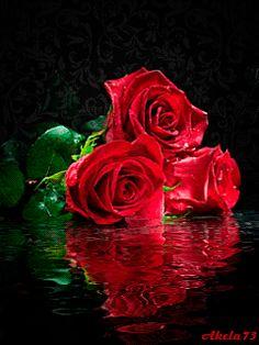 Decent Image Scraps: Beautiful Roses
