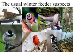 Wild Birds Unlimited: What birds winter in Michigan?