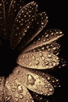 westvianorthsoutheast:  (via Drops Of Water | Simply beautiful iPhone wallpapers)