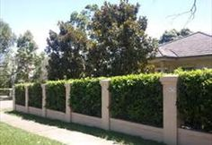 Garden Inspiration 20 Fascinating Garden Fence Ideas to Add Privacy for Your Home # Front Yard Hedges, Front Fence, Front Yard Landscaping, Backyard Fences, Garden Fencing, Fence Design, Garden Design, Entrance Design, Fast Growing Hedge Plants