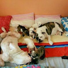 (2) Baggy Bulldogs - Timeline Photos