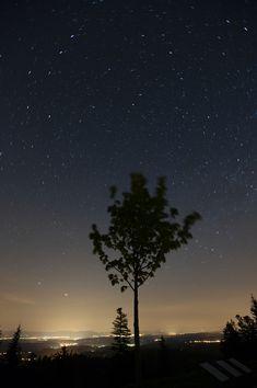 Baum mit Polarstern / Sterne / Der Himmel / Galerie | Nies.ch Northern Lights, Sky, Celestial, Sunset, Stars, Nature, Travel, Outdoor, Pictures