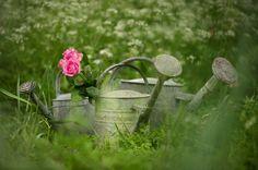 Vintage Galvanised Watering Cans - Mabel & Rose
