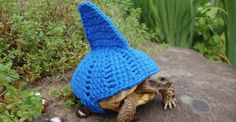 Wonderfully ridiculous sweaters turn tortoises into sharks, pumpkins, and more [11 pics]