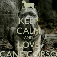 Keep Calm and Love a Cane Corso Cane Corso Italian Mastiff, Cane Corso Mastiff, Cane Corso Dog, Cane Corso Puppies, Chien Cane Corso, Cane Corsa, Boxer Bulldog, New Puppy, Dog Quotes