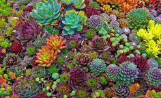 Image result for succulent plants