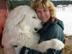 Hugging your best friend.  The Pyrenean Mountain Dog, known as the Great Pyrenees in North America. 10,000,000 Artists & Artlovers - Google+