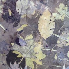 On cotton, Eco print, by Tash Wesp