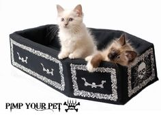 Casket cat bed! Name a tuxedo cat Dracula and watch him rise from his coffin every night!