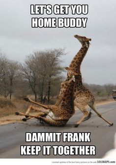 If Kris & I were giraffes...